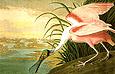 John James Audubon Roseate Spoonbill 1935
