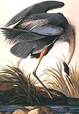 John James Audubon Great Blue Heron 1821