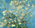 Vincent van Gogh Almond Blossoms 1890