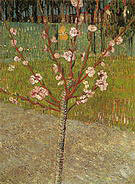 Vincent van Gogh Almond Tree in Blossom 1888