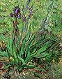 Vincent van Gogh The Iris St Remy