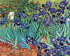 Vincent van Gogh Irises in Garden St Remy